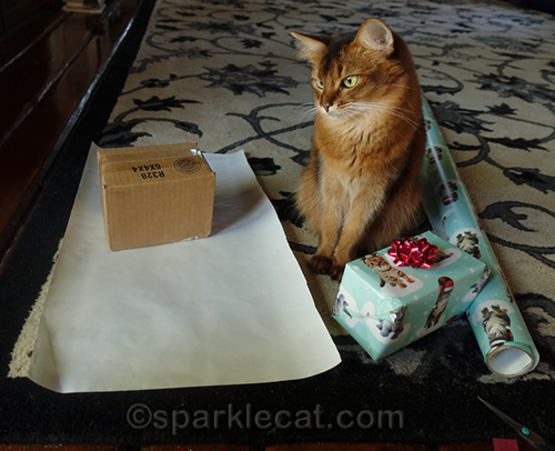 somali cat wrapping Christmas presents