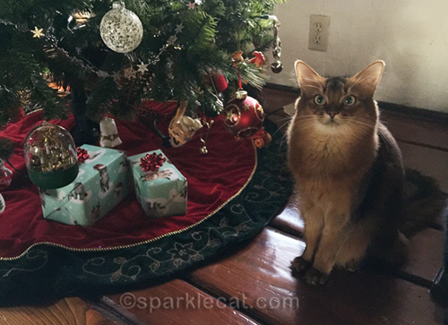 somali cat with presents for her roommates