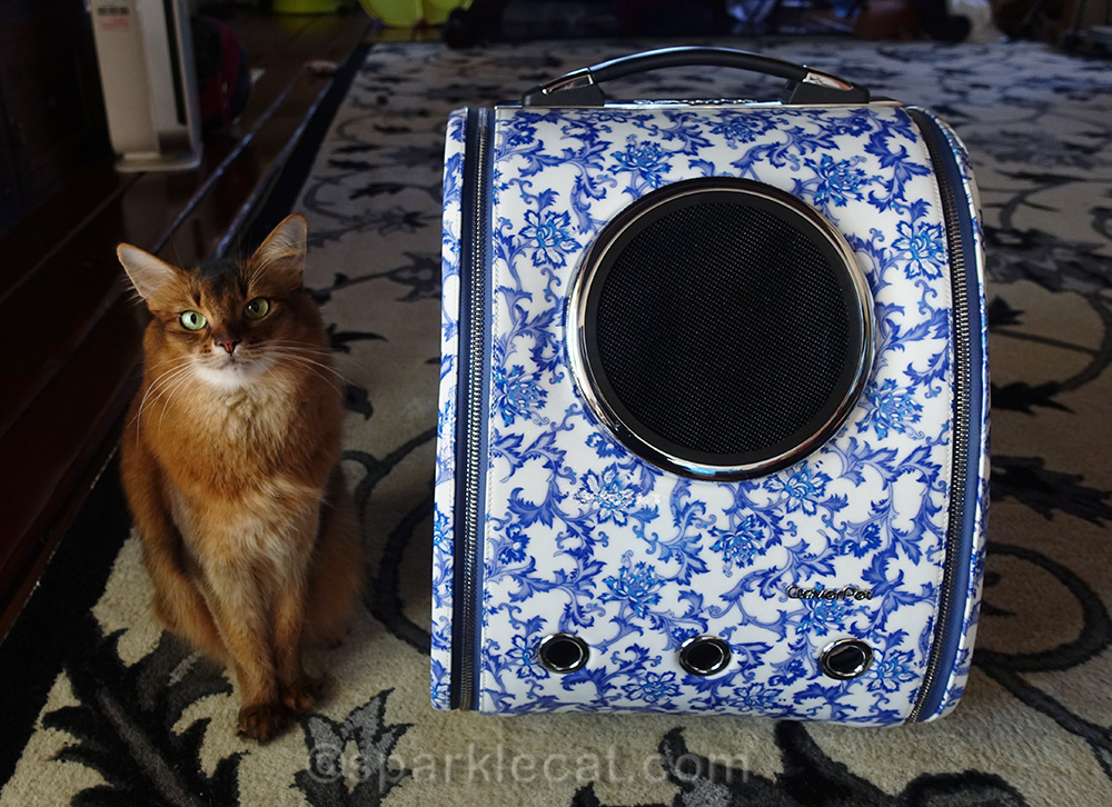 somali cat with new Cloverpet Backpack Carrier