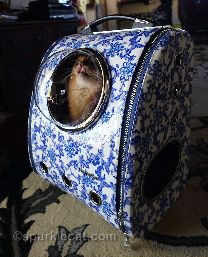 somali cat sticking out tongue in backpack carrier bubble window