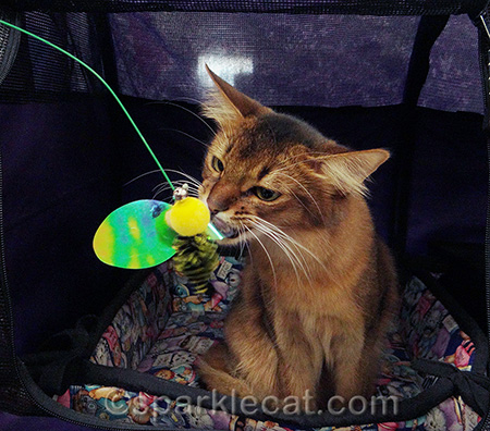 I killed it several times at the cat show
