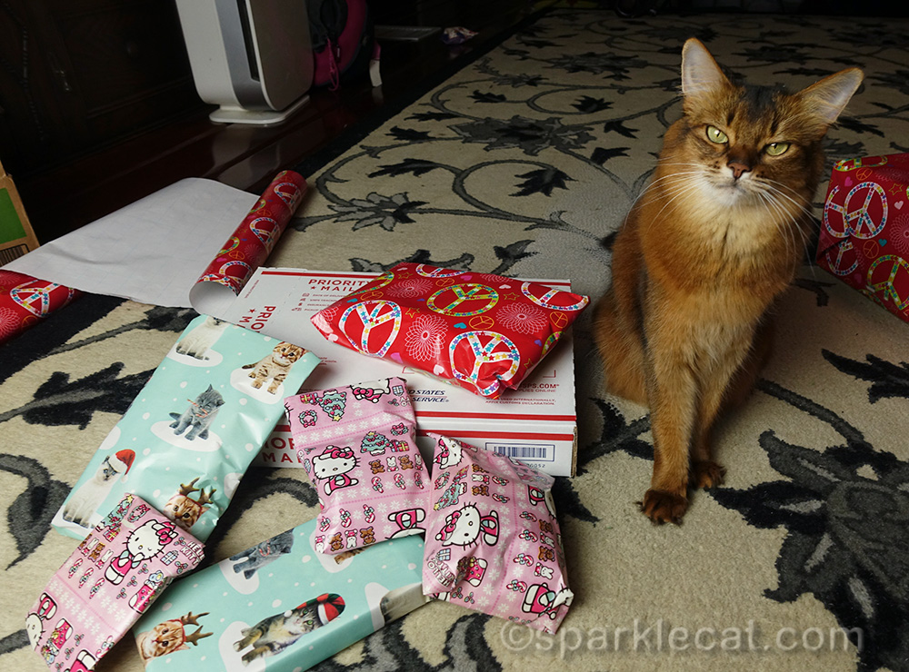 somali cat with secret paws gifts