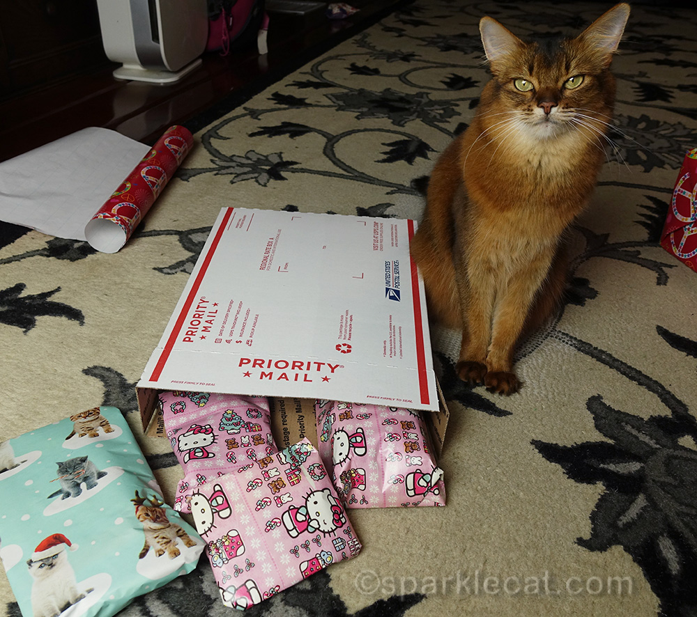 somali cat with secret paws gifts wrapped and ready to be boxed up