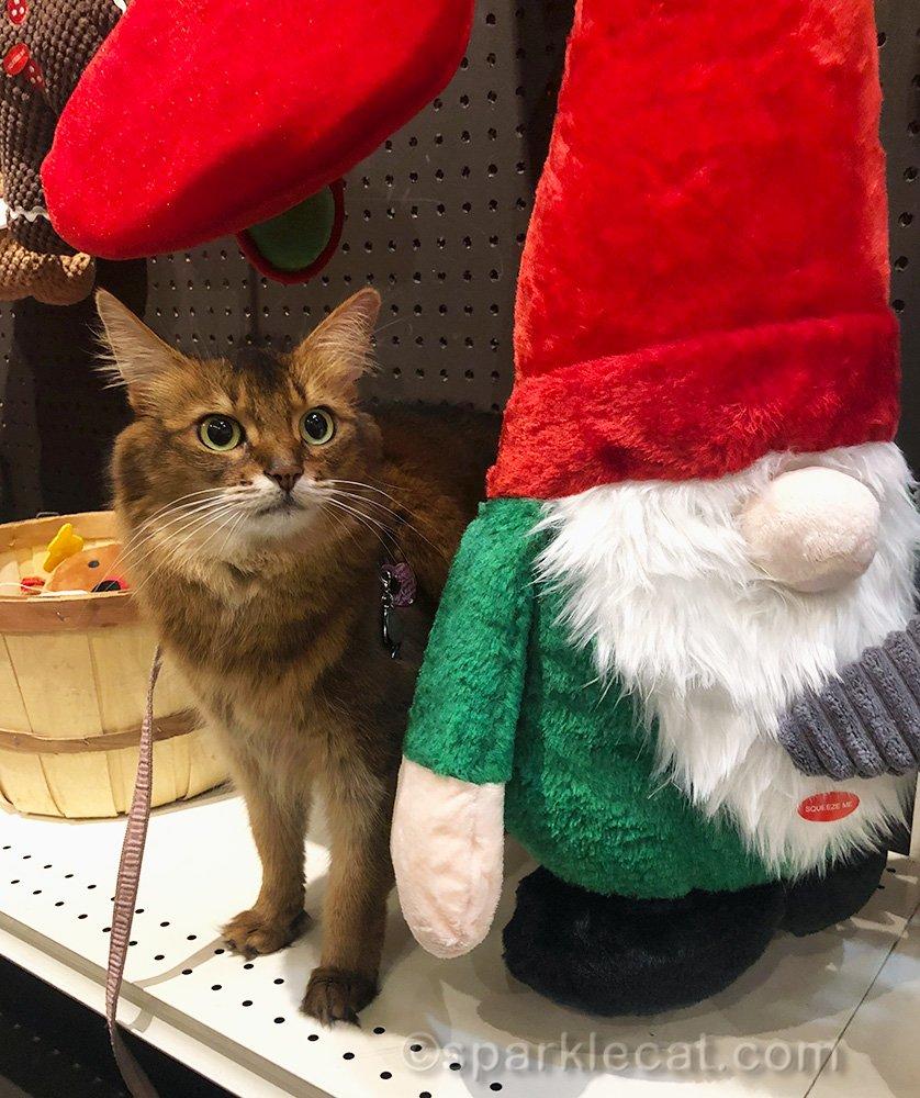 somali cat next to big elf dog toy