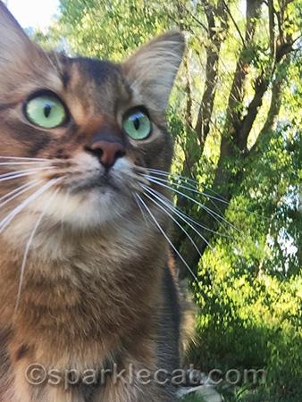 Somali cat, arty photo, arty cat selfie