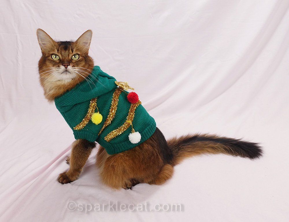 somali cat wearing ugly Christmas cat sweater