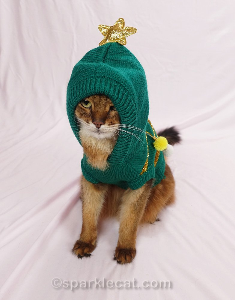 somali cat having problems with hoodie part of ugly sweater