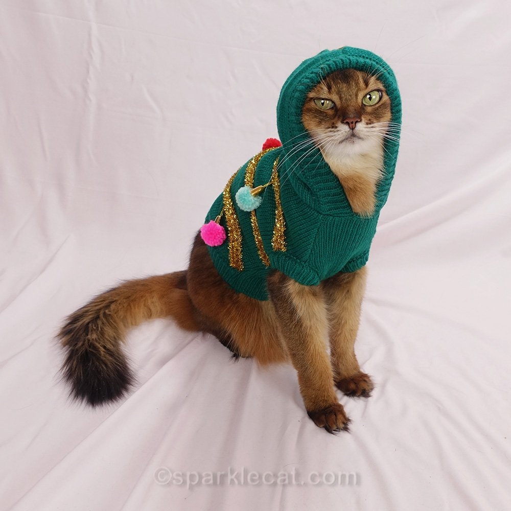Somali cat looking thug-like in ugly Christmas sweater