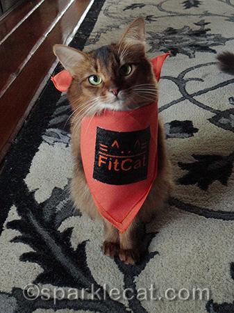 somali cat, orange bandana, FitCat Publishing