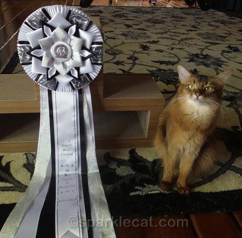 somali cat posing with 4th best somali premier rosette