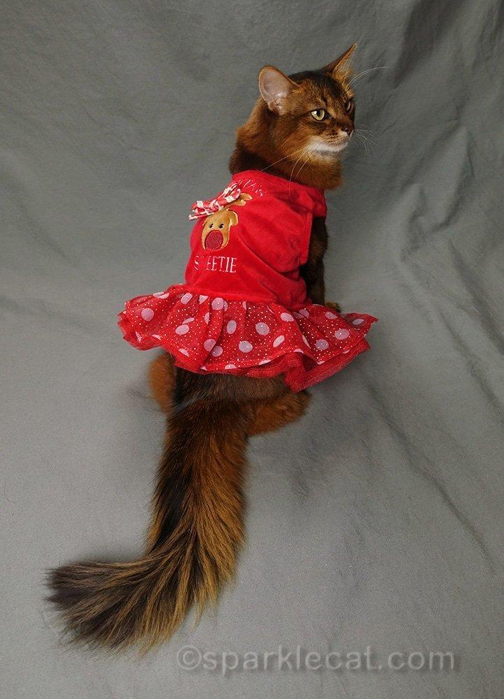 somali cat wearing ugly christmas dress