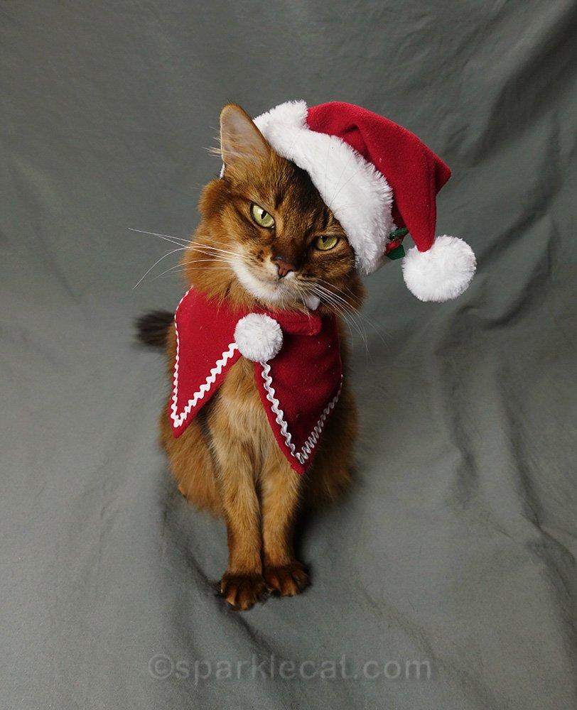 somali cat in red cape and Santa hat