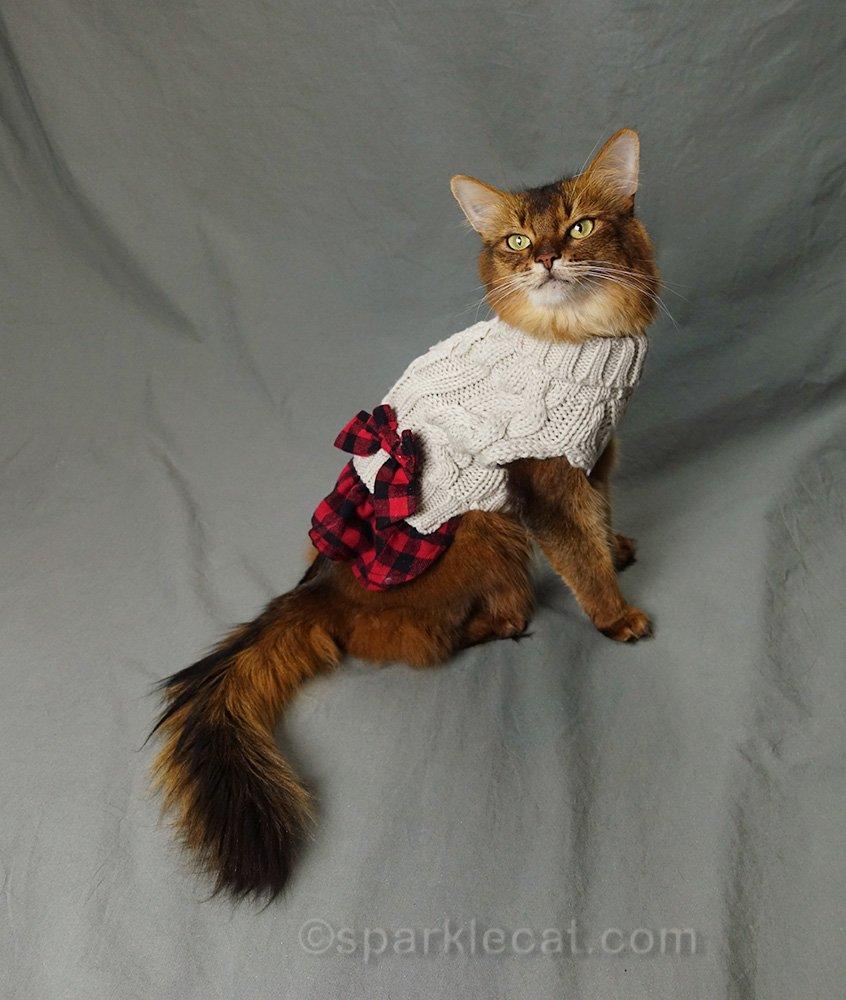 somali cat modeling cute winter sweater dress