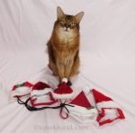 Summer gathers up her Santa cat hats and tries them on to see which one her readers like best.