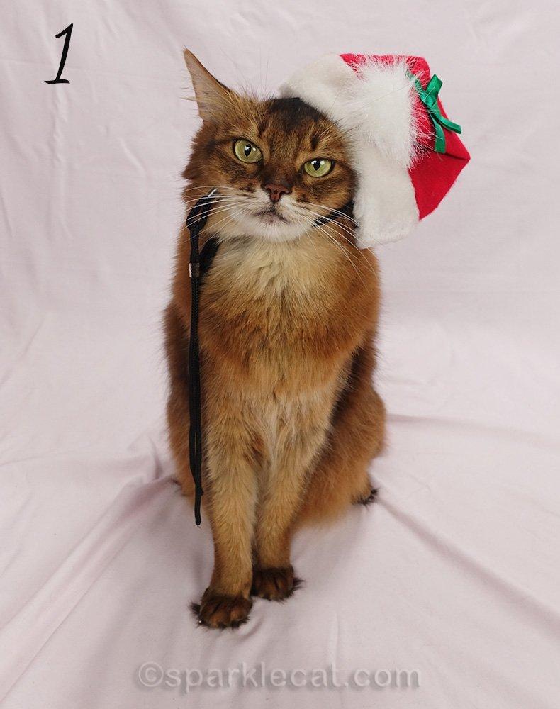 somali cat with stiff, ill fitting Santa hat on