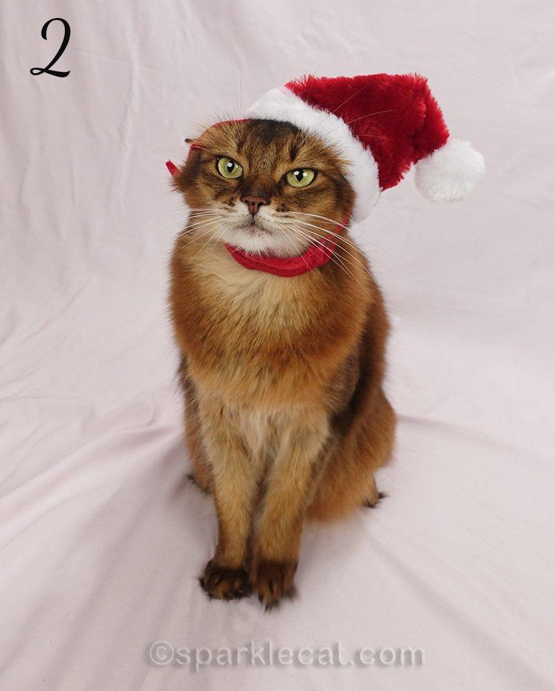 somali cat wearing awkward santa hat