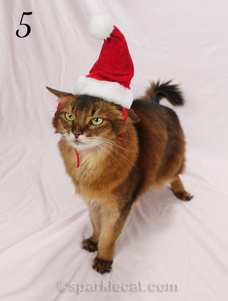 somali cat with really weird santa cat hat