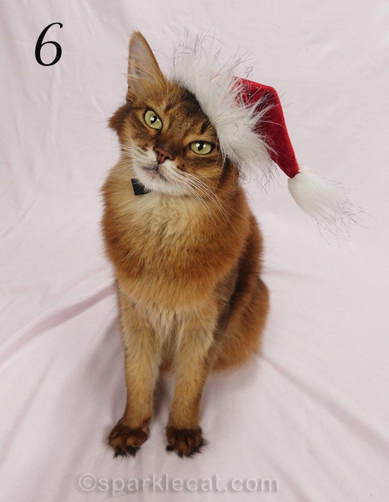 somali cat with tiny santa hat