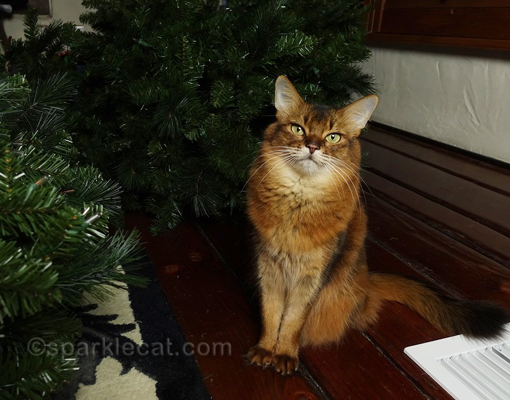 somali cat with disassembled Christmas tree