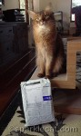 somali cat, cat with package, secret paws