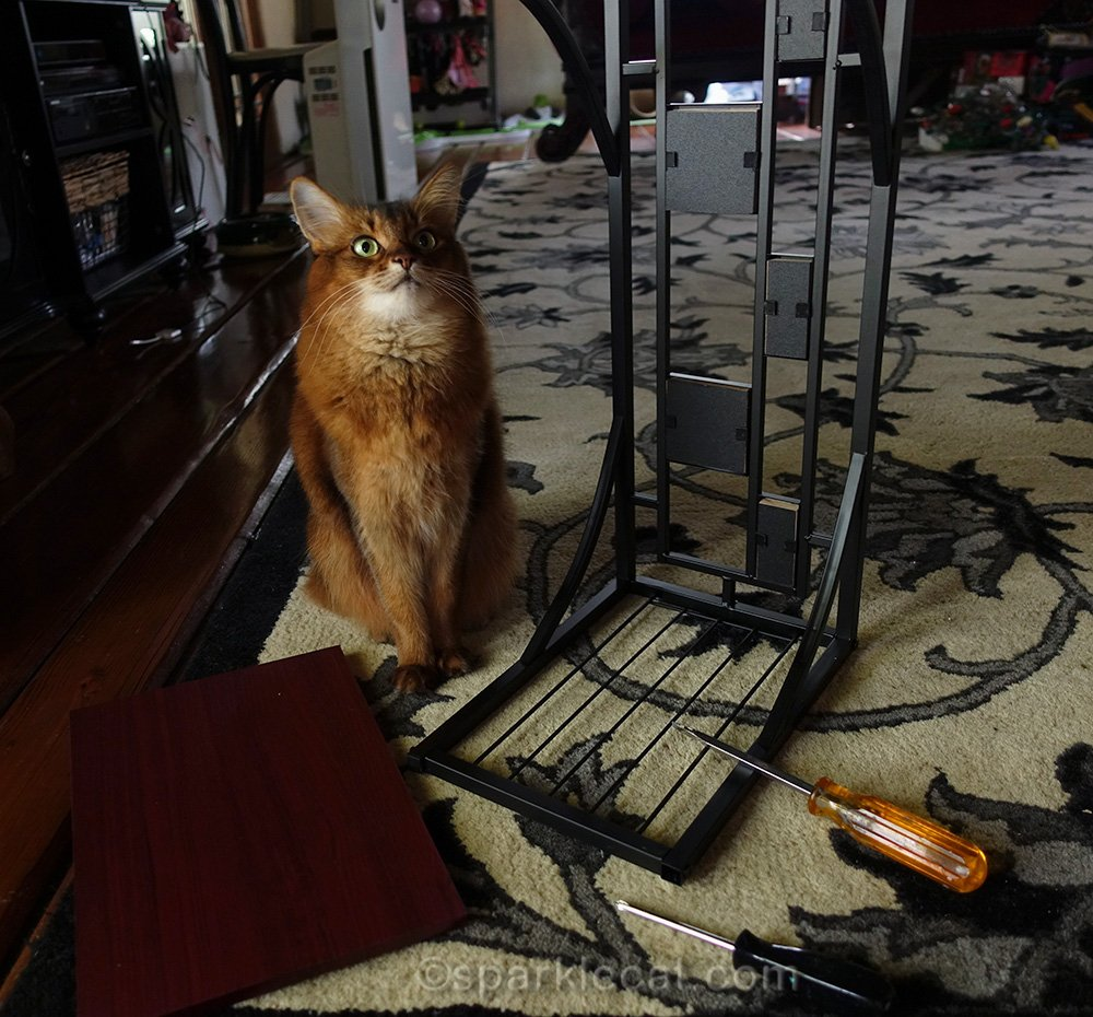 somali cat performs supervision on side table assembly