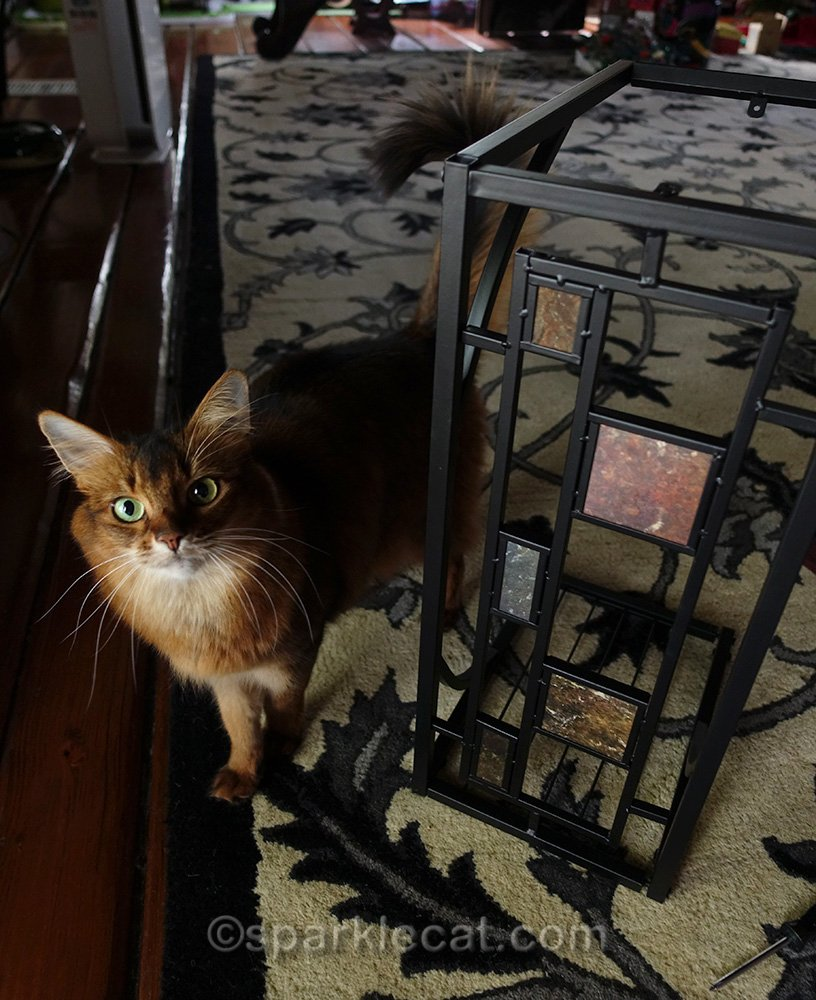somali cat with partly finished side table