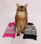 After having to wear an ugly Christmas sweater, Summer gets to model some pretty cat sweaters.