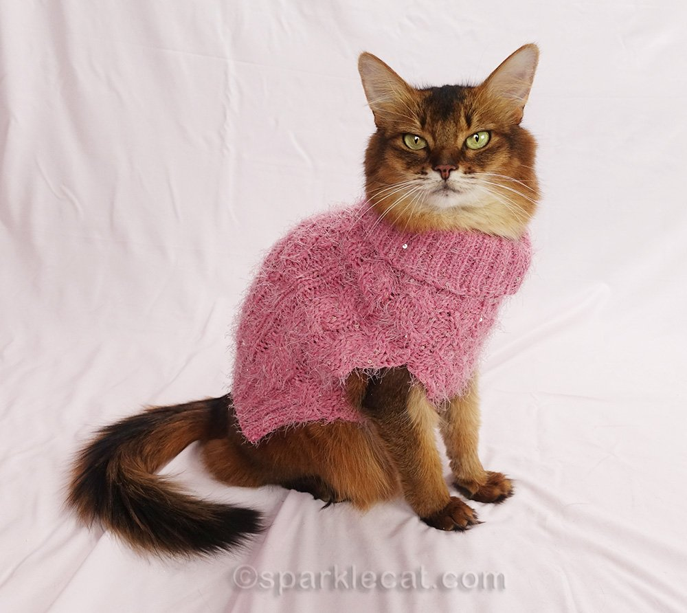 somali cat wearing pink sparkly sweater
