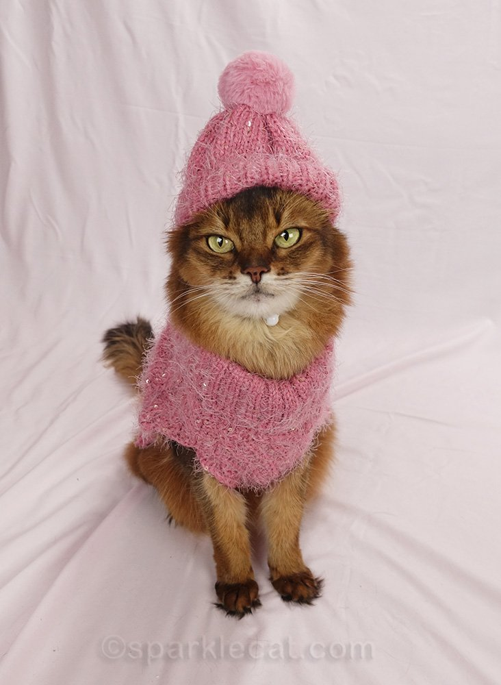 somali cat wearing pink sparkly cat sweater and knit cap