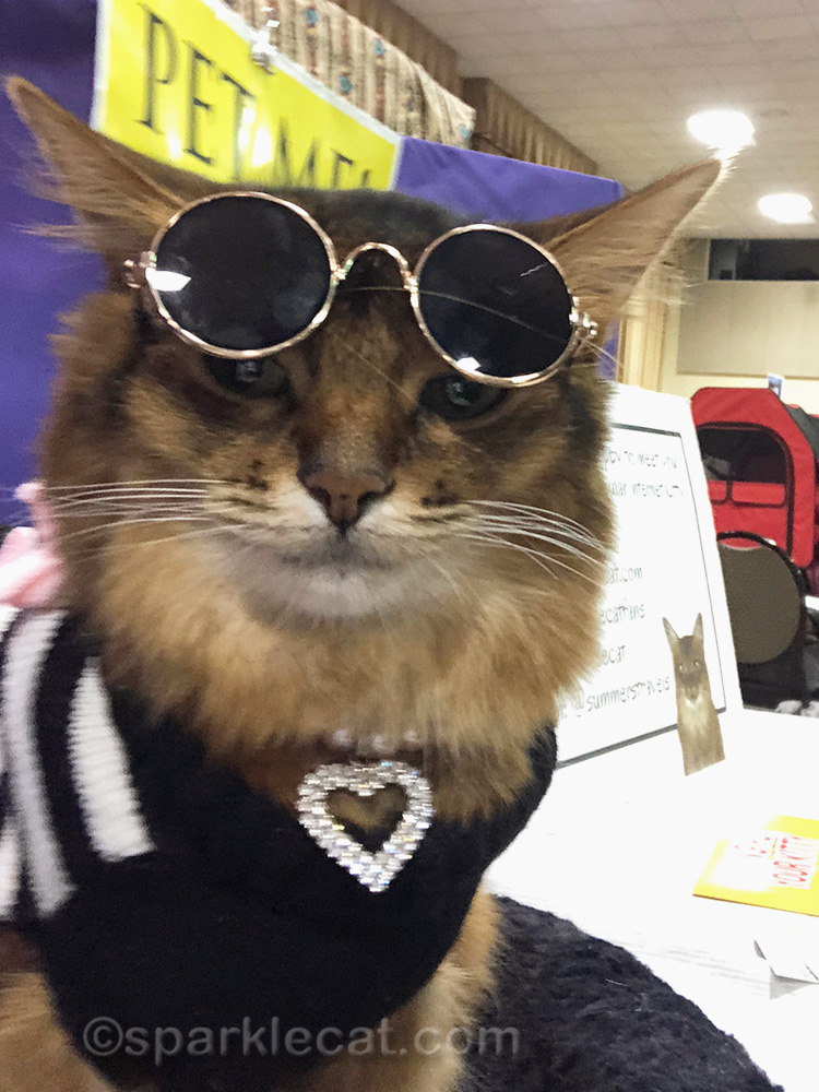 somali cat selfie with sunglasses askew