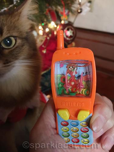 somali cat annoyed about fake phone