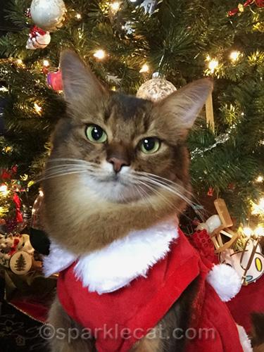 somali cat Christmas Eve selfie