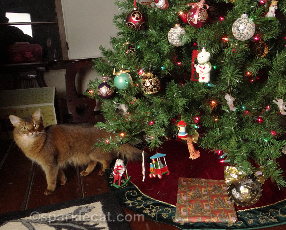 somali cat with christmas tree, 2015