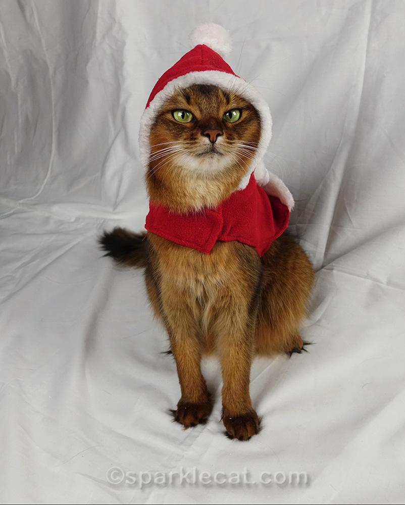 somali cat posing in Santa outfit