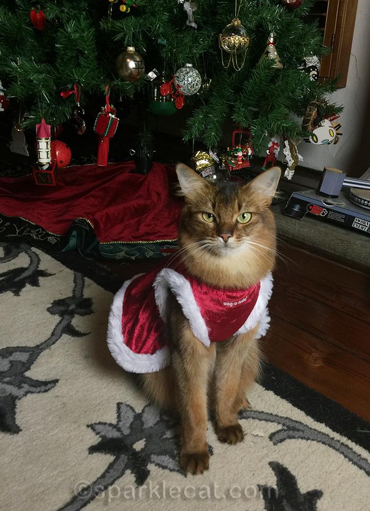somali cat in Santa dress in front of tree