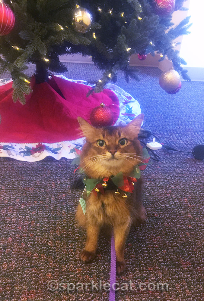 therapy cat at hospital in festive holiday collar.