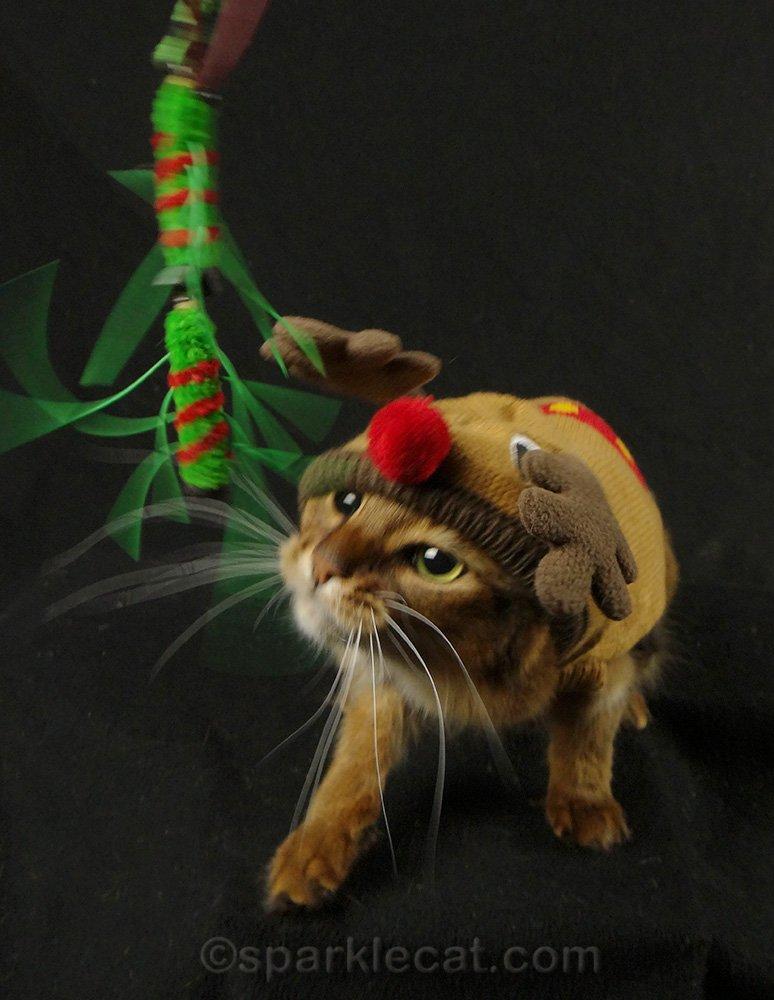 somali cat in reindeer sweater stalking cat toy