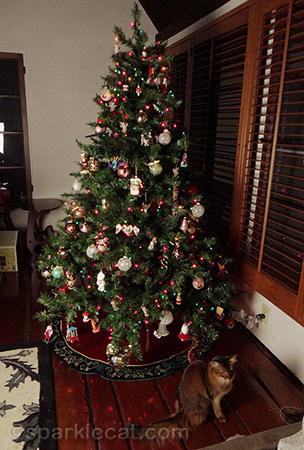 Christmas tree, Somali cat