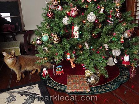 Christmas tree, Somali cat, Christmas present