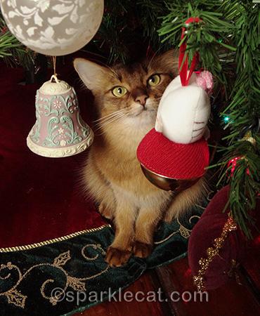 Somali cat under the Christmas tree