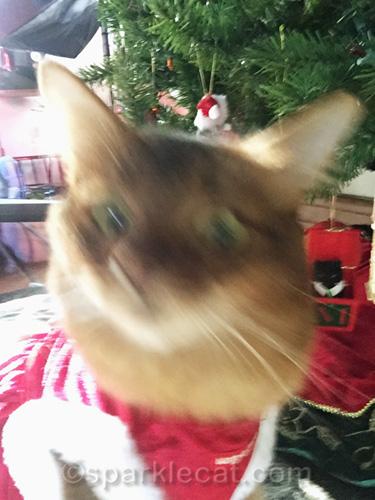 blurry catmas day cat selfie