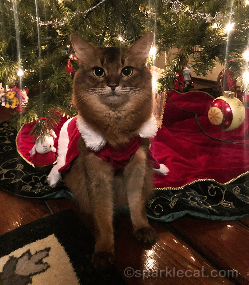 Here is Summer's Christmas wish for all her readers