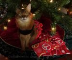 Summer shares some cat thoughts on Christmas 2020, and what is really important.