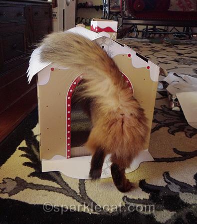 gingerbread house cat scratcher, somali cat