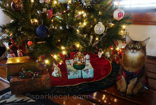 somali cat in dress by tree on Christmas morning