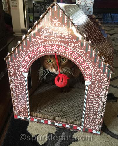 somali cat in new cat scratcher playhouse