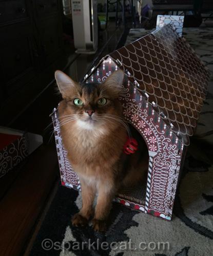somali cat in gingerbread cat scratcher playhouse