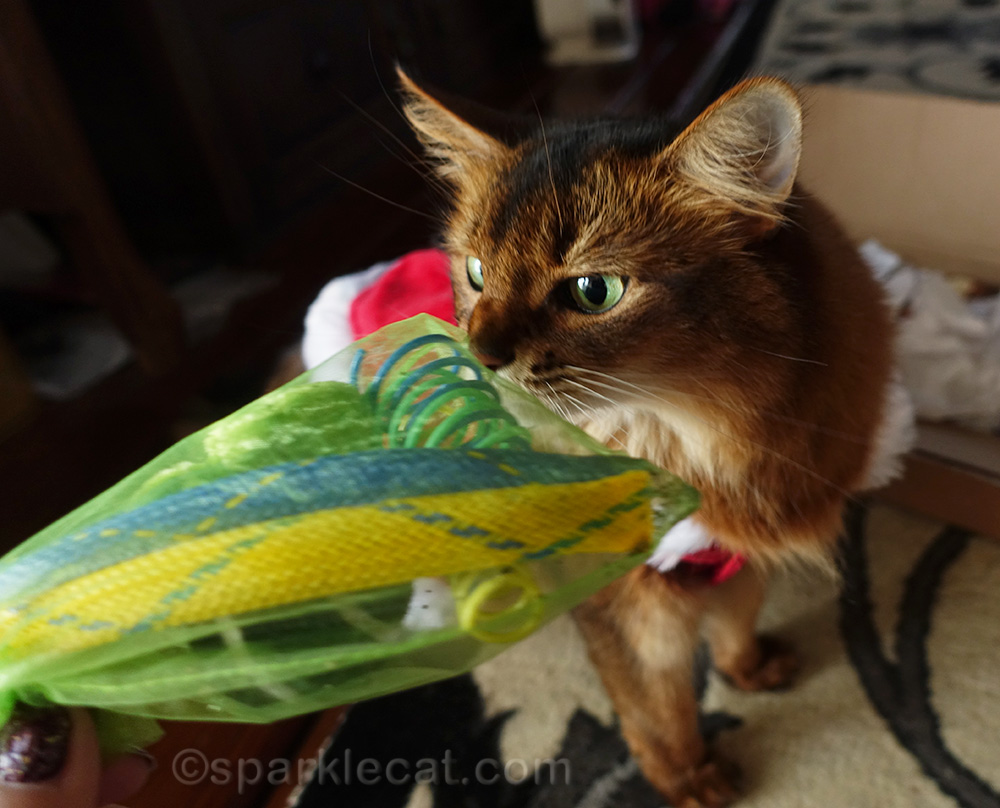 somali cat whiffing catnip infused toys