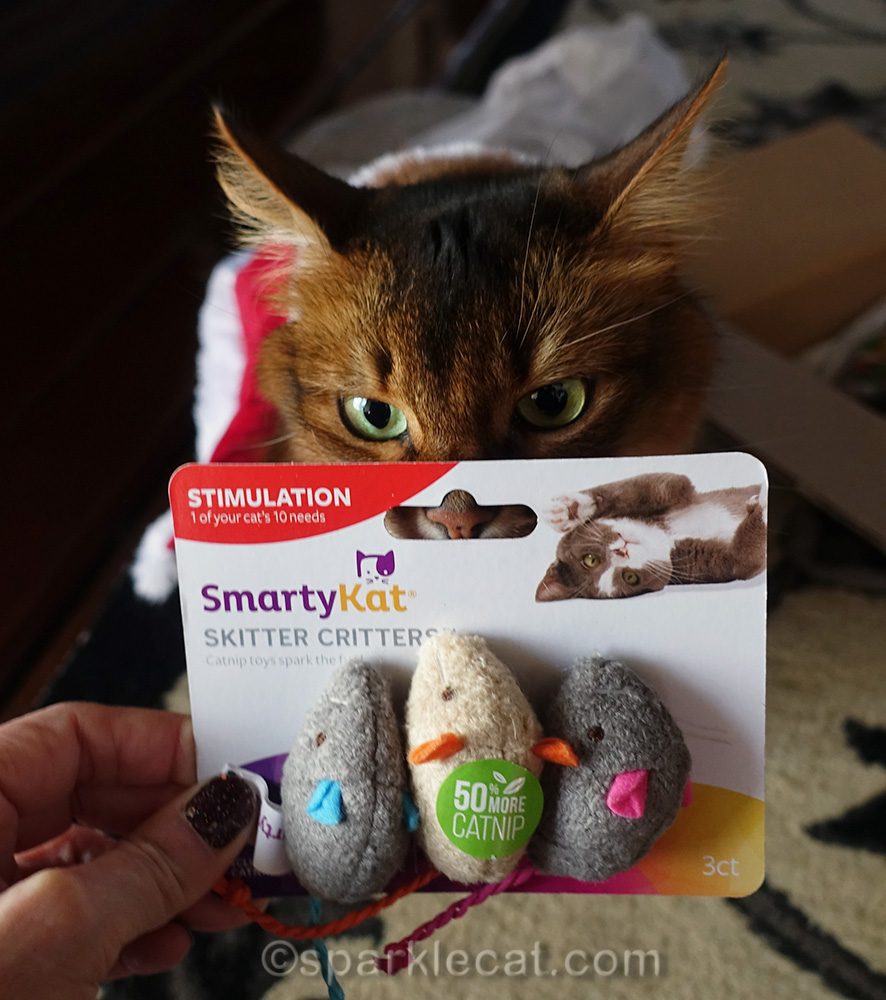 somali cat with catnip mice
