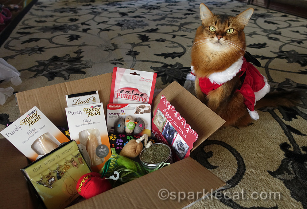 somali cat with box of opened secret paws gifts